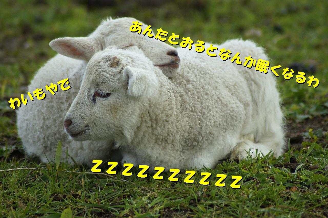 寝れ 眠たい の ない に